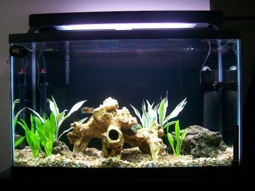 Цихлиды рыбки короли аквариума